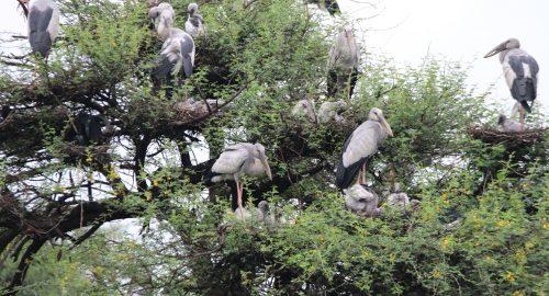 Vettangudi-Bird-Sanctuary-2