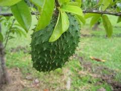 seetha fruit